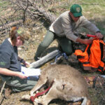 Joe Pinson – Interviewing Wildlife Management Experts, Wildlife Biologists and Wildlife Conservationists
